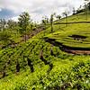 MUNNAR TEA PLANTATIONMunnar, Kerala, India