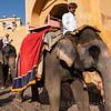 ELEPHANTS, A,BER FORT, JAIPUR