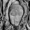 BUDDHA HEAD, BANYAN TREE