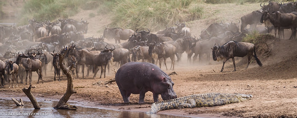 Croc still laying in the Hippo's spot
