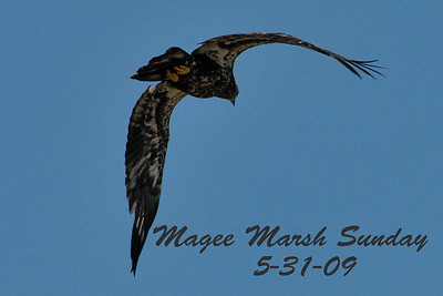 Magee Marsh Sunday 5-31-09