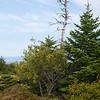 Acadia NP Cadillac Mountain IMG_2776