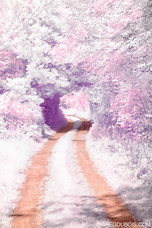Dirt Road Winds through Tree Tunnel in Boxford Massachusetts