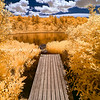 Dock and Pond with Golden Trees at Pine Hole Bog in Andover Massachusetts