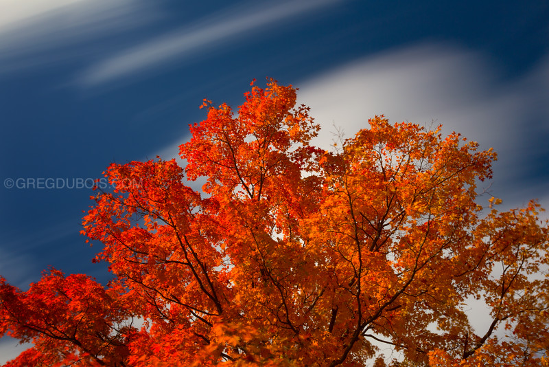 Daytime Long Exposure of Cumulous Clouds over Orange Fall Tree, October in Mount Prospect Cemetery Amesbury MA USA