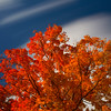 Orange Fall Tree with Clouds, October in Mount Prospect Cemetery Amesbury Massachusetts
