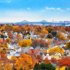 Fall in Boston Suburbs with Tobin Bridge in Malden Massachusetts