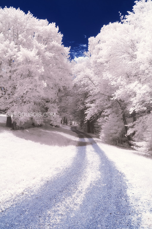 Dirt Road through White Infrared Forest in Andover Massachusetts