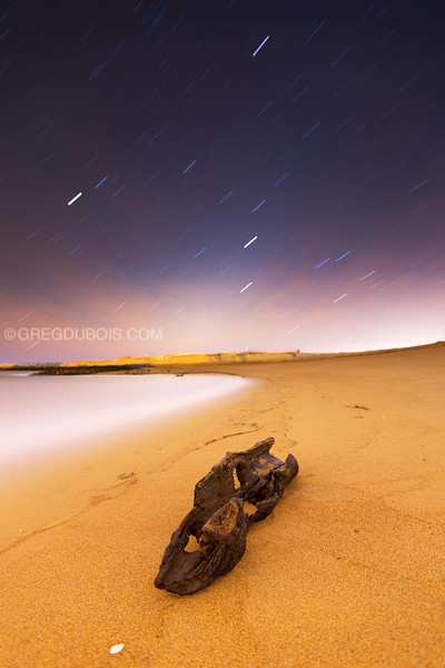 Plum Island Beach Star Trails over Driftwood
