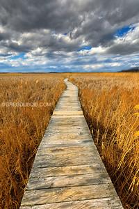 Marsh Loop in Plum Island Parker River National Wildlife Refuge