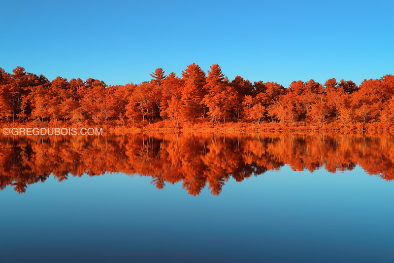 Stevens Pond Boxford Massachusetts with Mirror Reflection at Sunrise in Kodak Aerochrome