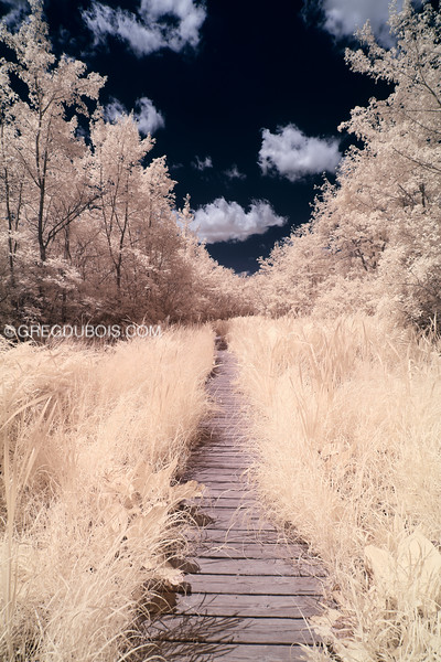 Pine Hole Bog Boardwalk in Infrared at Ward Reservation in Andover Massachusetts