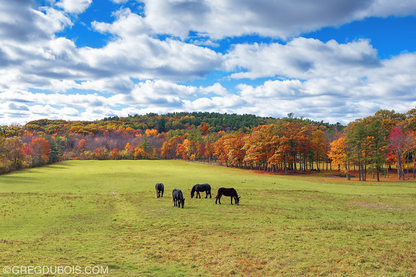 Horses Grazing on a Cloudy Fall Day in Salisbury Massachusetts