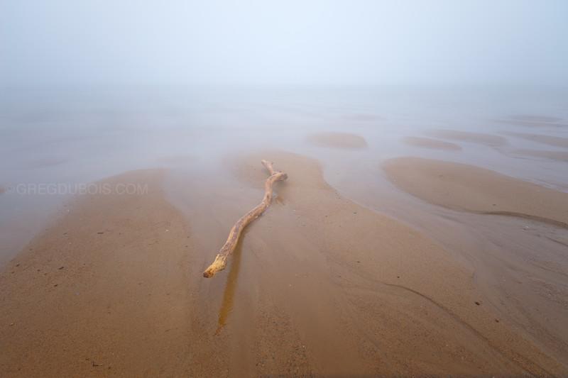 Plum Island Beach Driftwood in Fog at Low Tide