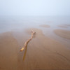 Plum Island Beach Driftwood in Fog at Low Tide