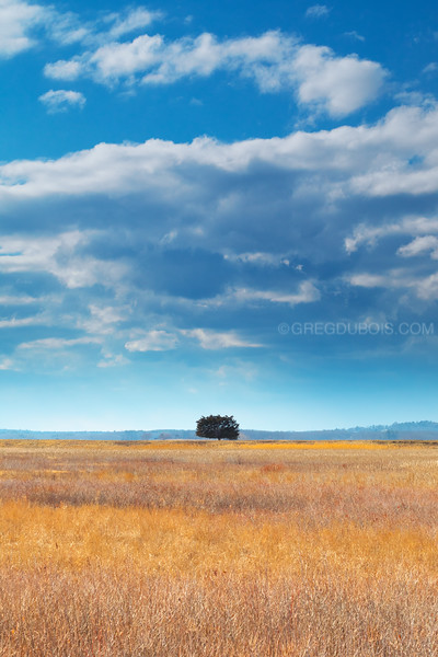 Lone Tree over Marshland under Cloudy Blue Sky on Plum Island Massachusetts