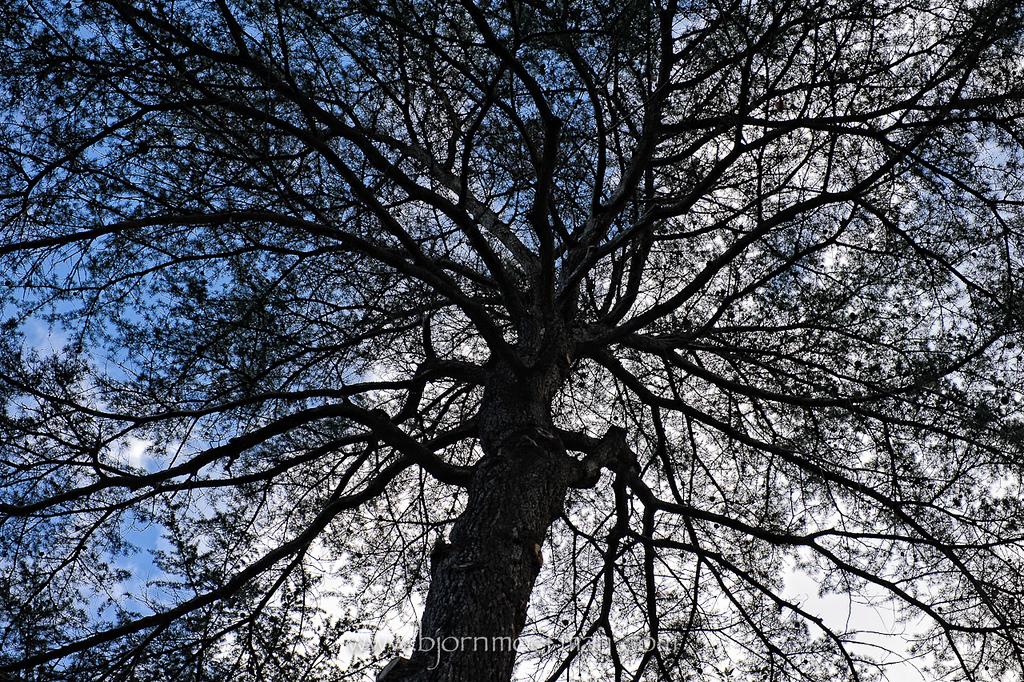 Winter tree park Melbourne, AUS