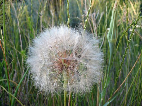 Mesa Verde National Park, Colorado (6)