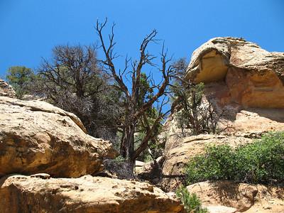 Mesa Verde National Park, Colorado (21)