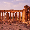 Ancient templefield of Palmyra