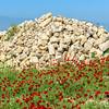 Red poppy field, Pamukkale