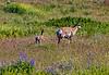 Montana; Charlo; National Bison Range; USA