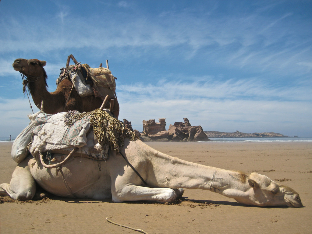 camel and castle