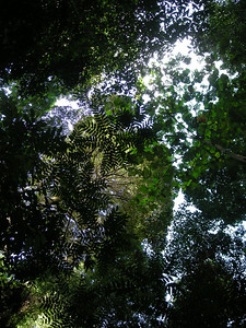 a view up through the canopy