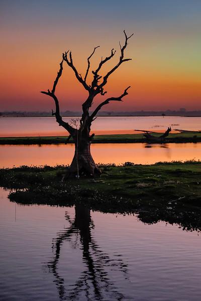 U Bein bridge tree at dusk