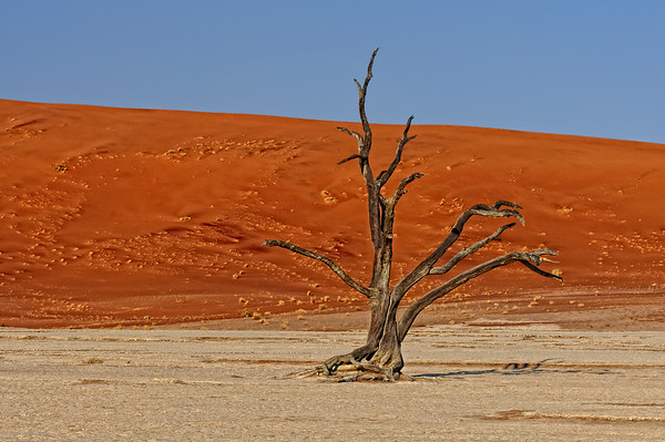 Namibia - Beauty and the Beasts