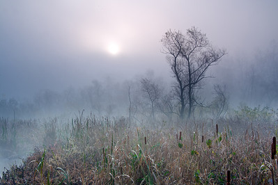 Beaver Marsh Cuyahoga Valley National Park