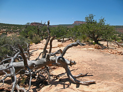 Natural Bridges National Monument, Utah (3)