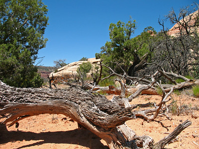 Natural Bridges National Monument, Utah (7)