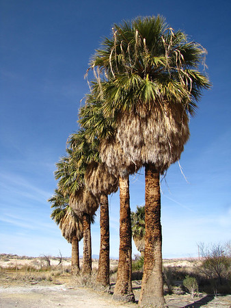 Blue Point Springs, Nevada (2)