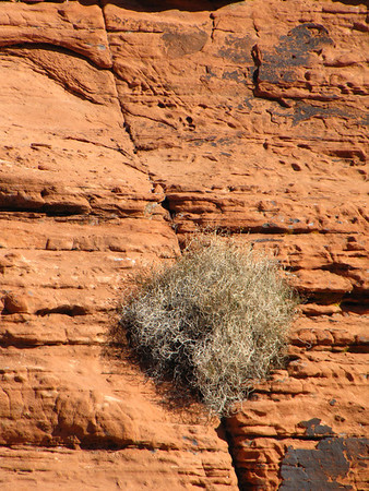 Valley of Fire State Park, Nevada (4)