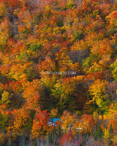 Mountainside Cabin and Autumn Trees in Golden Light, White Mountains New Hampshire