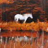 White Horse on New Hampshire Backroads in Fall