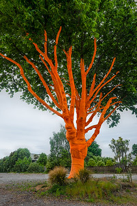 Artsy tree, Christchurch