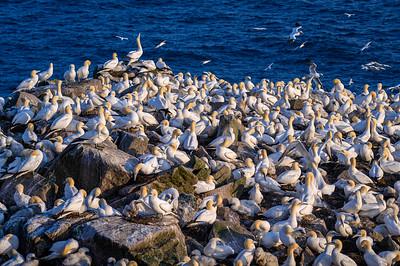Cape St Mary, NL