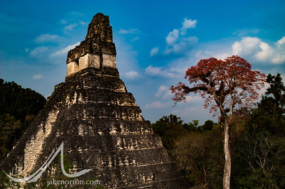 Tikal Temple I, AKA Temple of the Great Jaguar, in Tikal National Park, Guatemala.