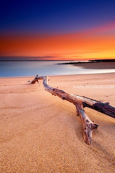 Plum Island Beach Driftwood with Frozen Sand at Sunrise, Newburyport Massachusetts
