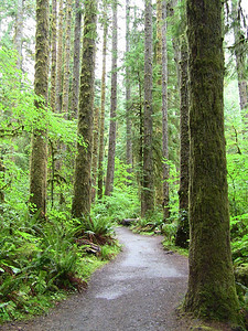 Sol Duc Rainforest, Olympic National Park, Washington (4)