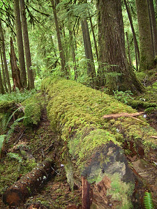 Sol Duc Rainforest, Olympic National Park, Washington (5)