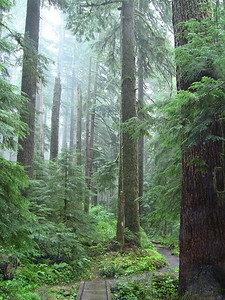Sol Duc Rainforest, Olympic National Park, Washington (15)