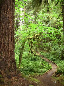 Sol Duc Rainforest, Olympic National Park, Washington (17)
