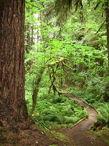 Sol Duc Rainforest, Olympic National Park, Washington (17)