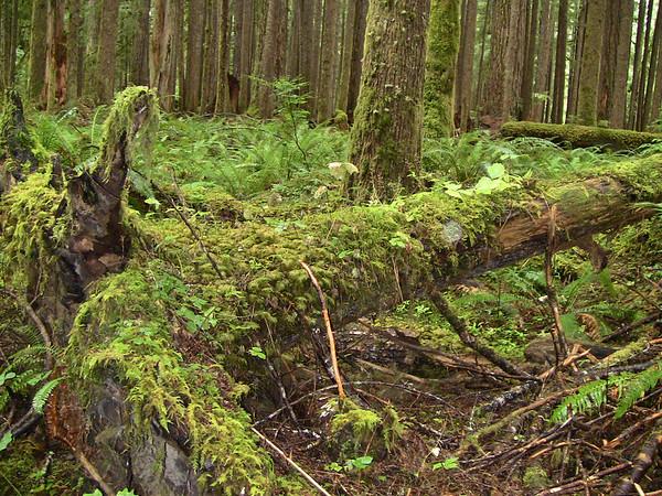 Sol Duc Rainforest, Olympic National Park, Washington (10)