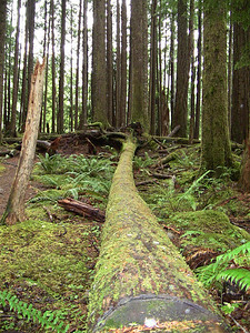 Sol Duc Rainforest, Olympic National Park, Washington (13)