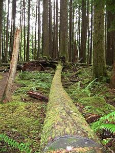 Sol Duc Rainforest, Olympic National Park, Washington (13)