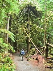 Sol Duc Rainforest, Olympic National Park, Washington (12)